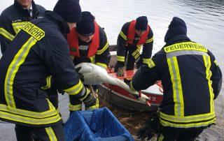 Tierrettung auf der Listertalsperre - Feuerwehr hilft verletztem Schwan