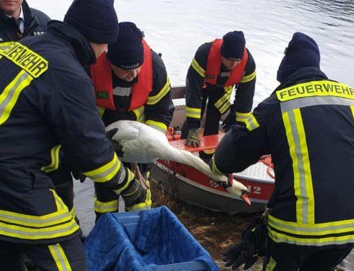 Tierrettung auf der Listertalsperre – Feuerwehr hilft verletztem Schwan